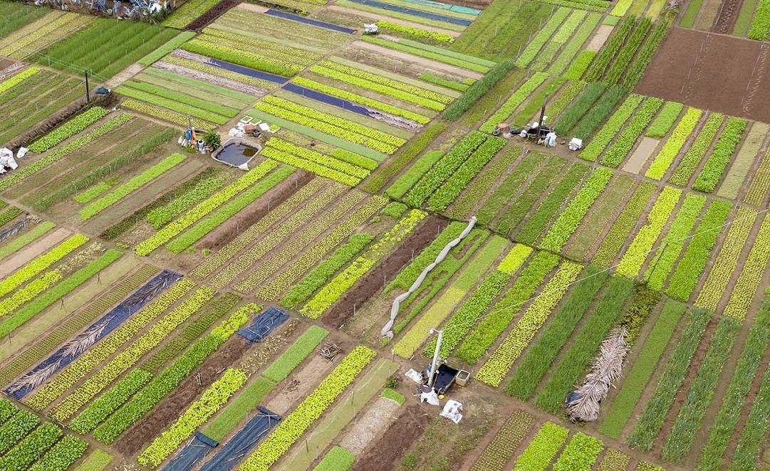 Làng trồng rau Trà Quế thuộc top 10 địa điểm nhất định nên ghé thăm khi tới Việt Nam