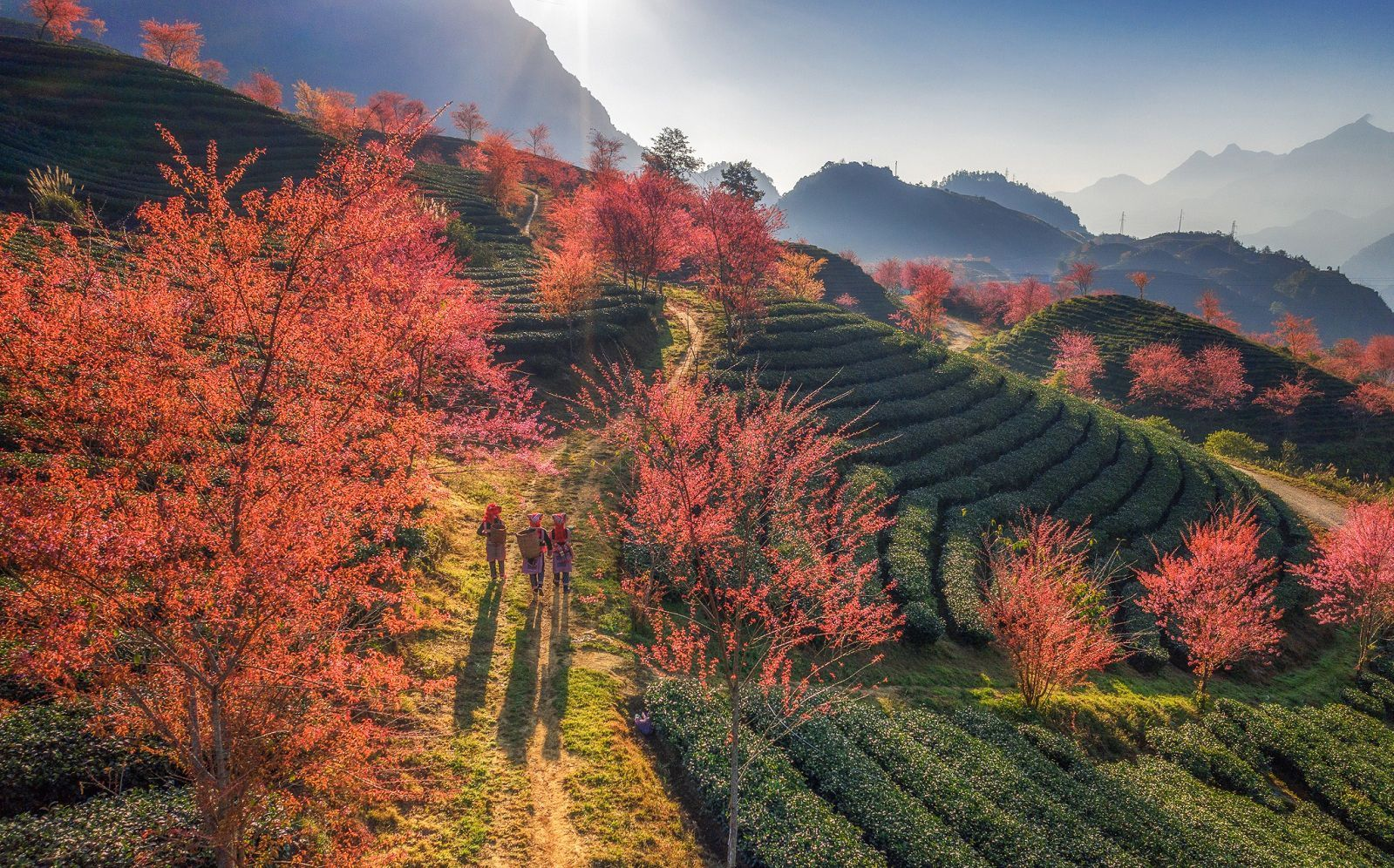 Four spots in Northwest Vietnam to see peach blossoms that fascinate visitors
