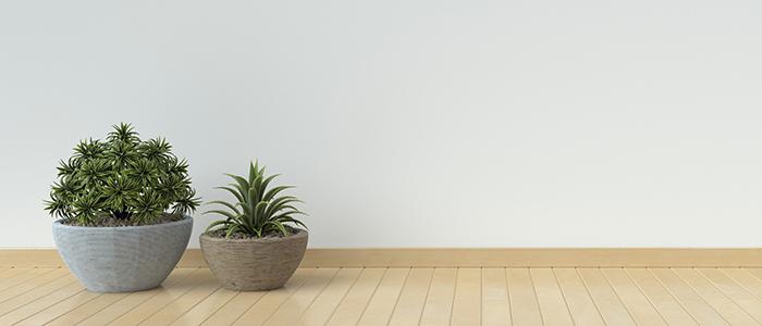 植物を置いてさわやかに!