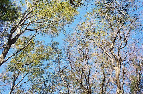 画像:樹ガーデン(ビアライターみつき『今日もどこかでソロび~る』)