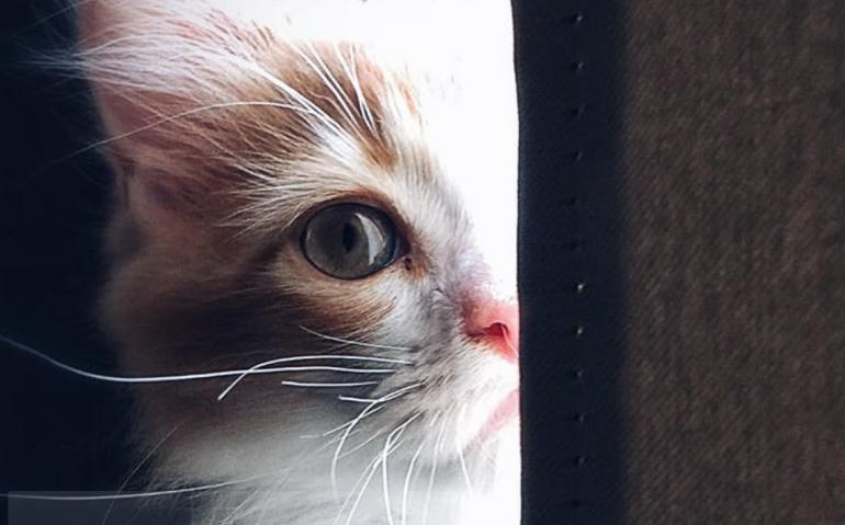 「猫は死期を悟ると飼い主の前から姿を消す」という説が示す本当の意味 @DIME アットダイム