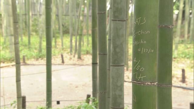 「竹林の散策路」約100本の竹に文字のような傷 京都 嵐山   NHKニュース