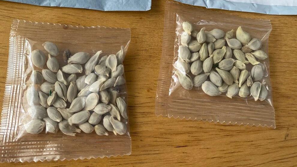 中国から謎の「種子」が送られてくる事件が続発 - GIGAZINE