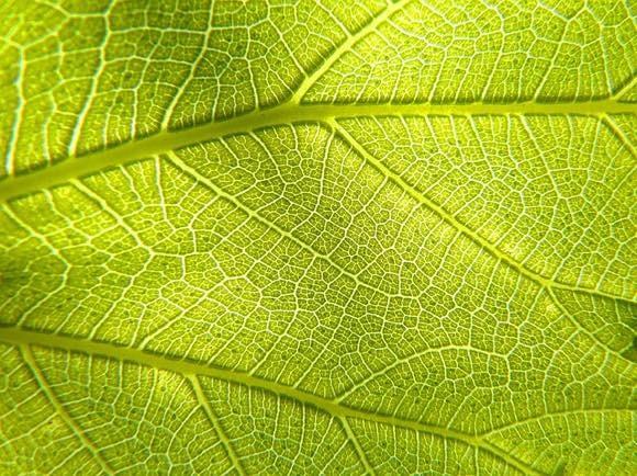 動物でも光合成ができる可能性が。血管に藻類を注入することで細胞に酸素を供給できることが判明(ドイツ研究) : カラパイア