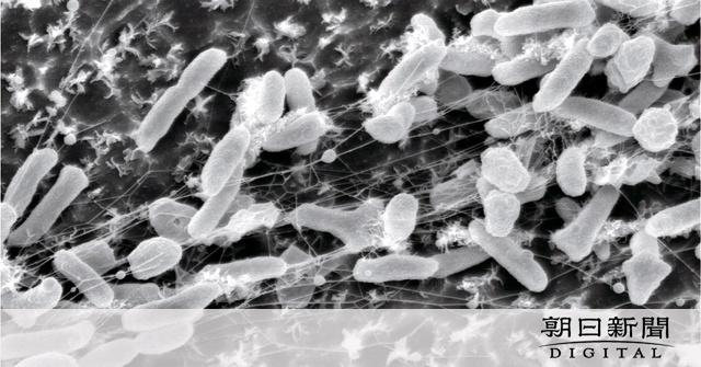 ペットボトルむしゃむしゃ 堺で発見の細菌、世界救う?:朝日新聞デジタル