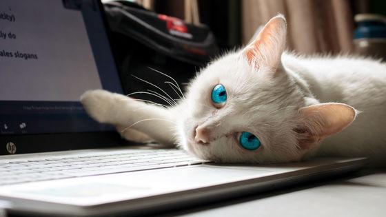 データベースの中身がほぼ削除されてネコの鳴き声だけが書き残される謎の「ニャー攻撃」が活発化 - GIGAZINE