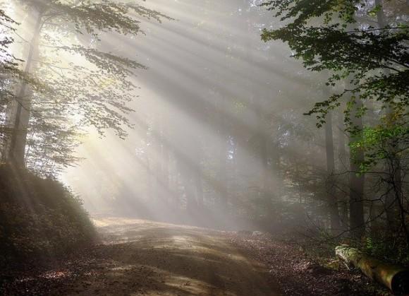 今日はどこの森へ行こう?世界各地の森の音を収録したオーディオファイルが無料公開中 : カラパイア