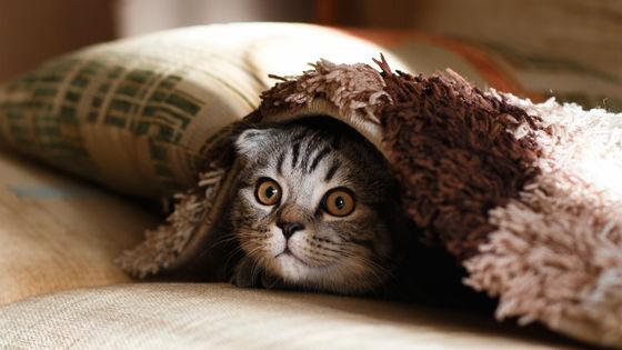 「ネコ好きは無神論者」「神に求めるものをネコで代用している」という研究結果 - GIGAZINE
