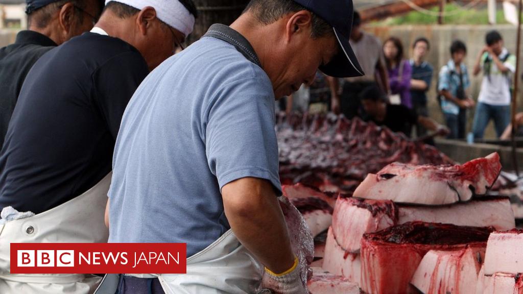 日本とクジラ なぜ日本は捕鯨をするのか - BBCニュース