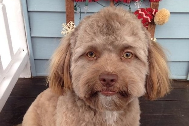 【まじで】人間の顔をしてる犬を発見したwww