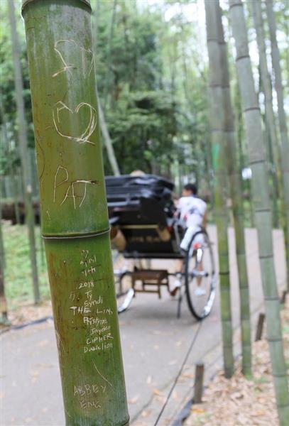 京都・嵯峨嵐山の竹林で落書き100本刃物で中国語やハングル - 産経WEST