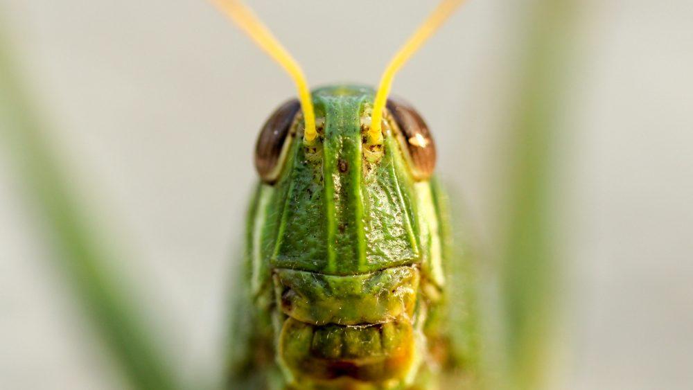 シーンとなる シーンとなった 英語 crickets 意味