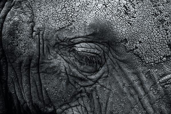 シワを修正する 英語 photoshop out my wrinkles