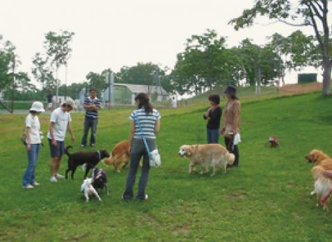 Niseko Annupur - Dog Run