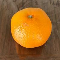 柑橘ゆすら