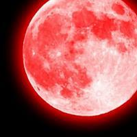 緋月 ライル