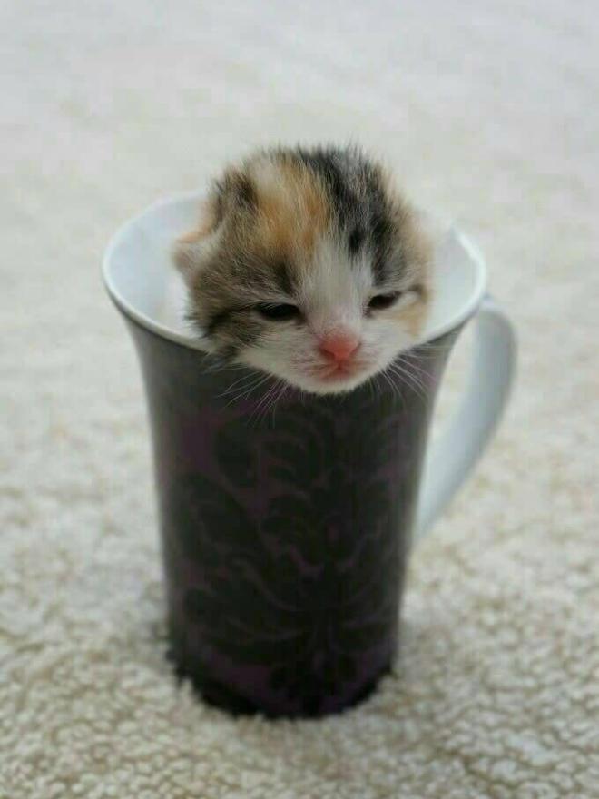 俺が猫で猫が俺