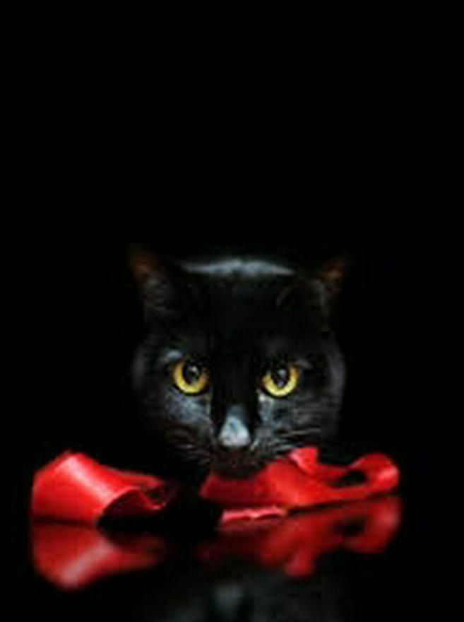黒猫の名誉