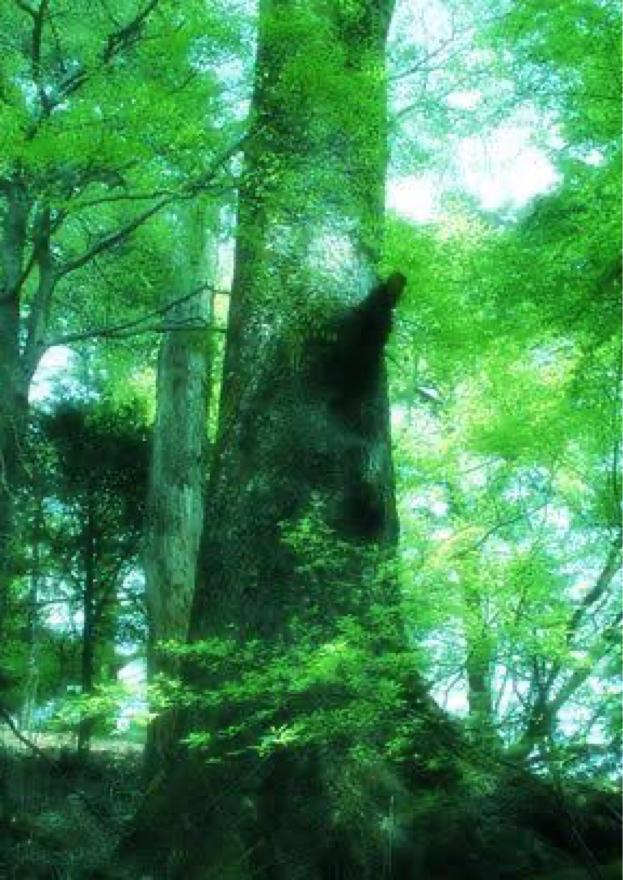 世界樹とハネモノ少女 第一部