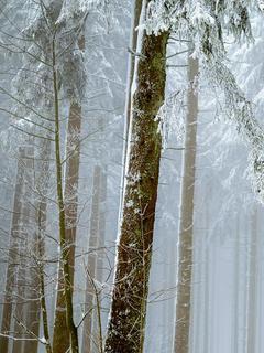 強面男と白蛇女は雪解けを待ち望む