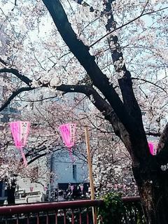 -桜-夢見た自分