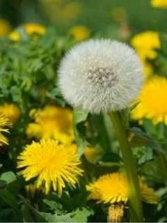 真心の花と悲しみの花