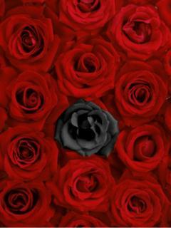 紅色と漆黒の薔薇畑の中で