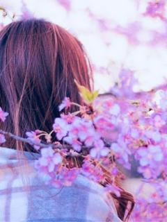 桜が舞う頃