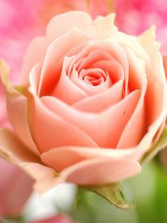 「ありがとう」という名の花の下で。