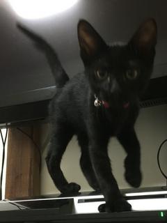 僕の大事なモノは猫に取られました