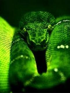 蛇と12星座の王