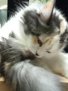 猫への思いが重いオトコ