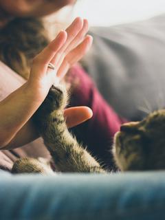 ずっと一緒だよ…~私と猫の最後の日