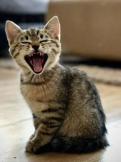 飼い猫が喋った日
