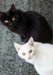 少年とタマとムギの捨て猫あやかし物語 第一章