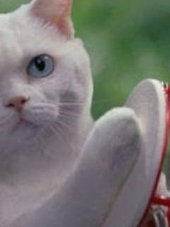 化け猫は鳴きやまない