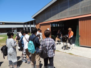 学類一言アピールの後はいよいよイベントの開始です!まずは牛舎見学の様子を覗いてみましょう。こちらは哺育舎を見学している様子。紹介してくれているのは本学のサークル、乳牛研究会のみなさんです。