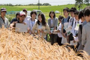 家畜だけではなく、作物の見学に参加された方もいらっしゃいました。こちらでも循環農学類の教員、学生より説明がありました。