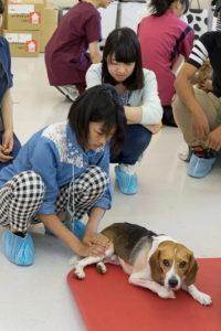 獣医保健看護学類ではペットにもリハビリ!というタイトルで、動物の理学療法について学んでもらいました。術後や高齢のため、歩行機能が低下したペットにはどのようなリハビリが必要なのか、在学生の指導を受けながら実習を行ってもらいました。