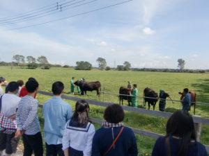 こちらは肉畜生産ステーション見学の様子。ここでは肉牛を約80頭飼育しております。牛たちのお世話は学生が中心。非農家や普通高校出身の学生もたくさんいるので、牛に触れた経験がなくても大丈夫!