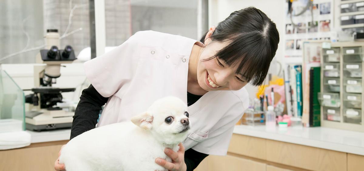 動物病院実習の経験をバネに動物看護師の仕事をもっと知りたいと思うようになった。