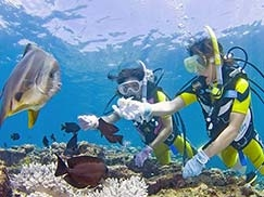 沖縄 体験ダイビング|アイランド倶楽部