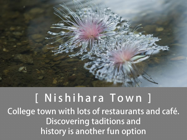 Nishihara Town College town with lots of restaurants and café.  Discovering taditions and history is another fun option