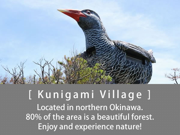 Kunigami Village Located in northern Okinawa. 80% of the area is a beautiful forest. Enjoy and experience nature!