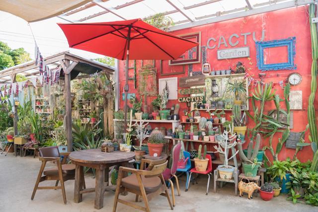 "Introducing a Very Special Shop! ""Plants Café Greenmama"" (Uruma City), a Delightfully Comfortable Café Full of Succulents"