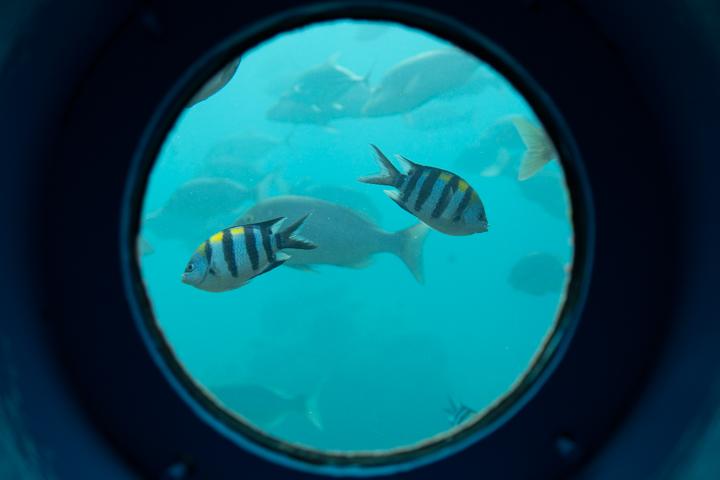 南国らしい熱帯魚を見ることが出来ます