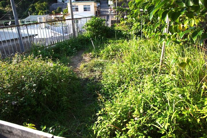 裏庭に生えて野草