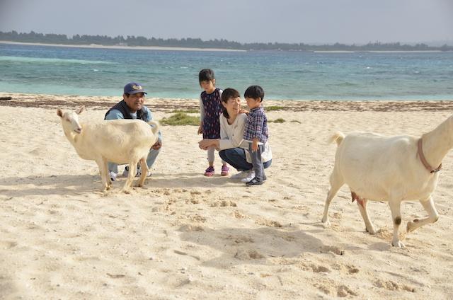 人口170人の素朴な島、来間島をヤギとお散歩【PR】