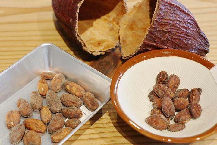 「カカオ 豆 」の画像検索結果
