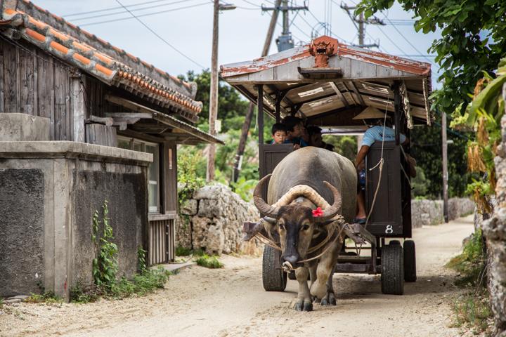 竹富島は水牛車でまわるのがおすすめ